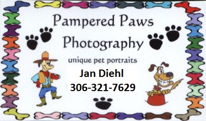 Pampered Paws Photography